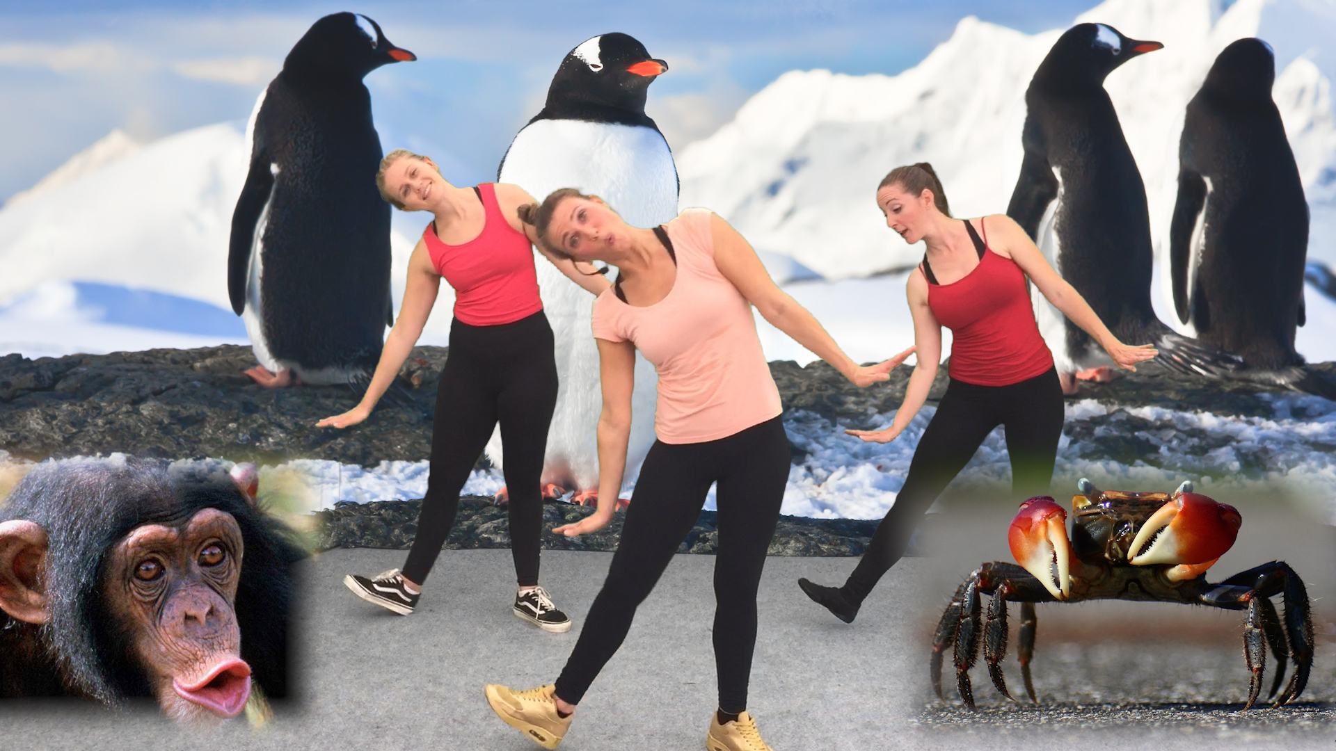 Animals Dance Course
